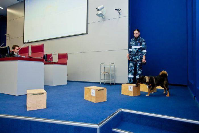"""Специально выведенный шакало-псовый гибрид (""""шакалайки"""")"""
